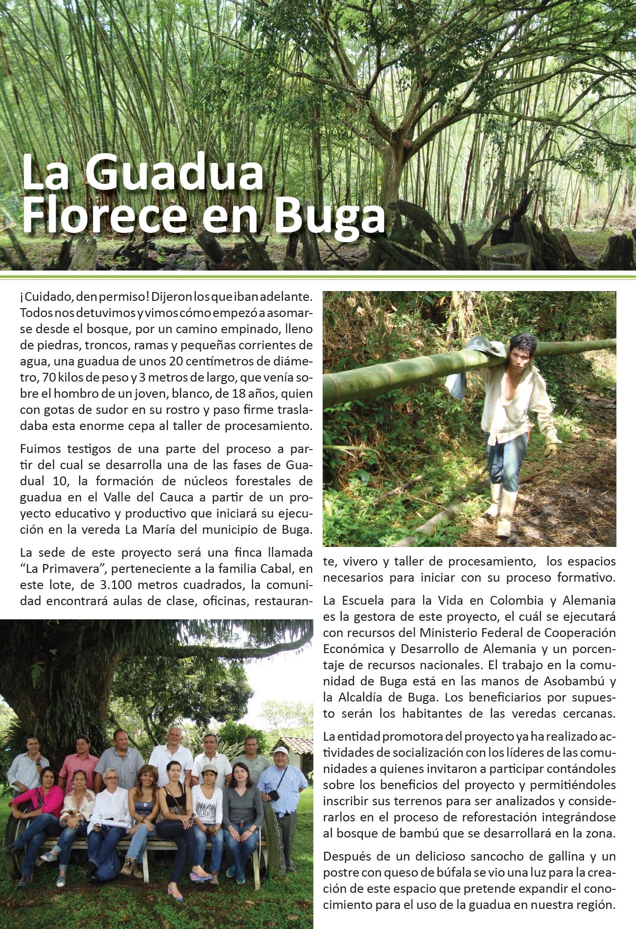 La Guadua Florece en Buga